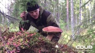 Сбор грибов - тихая охота!