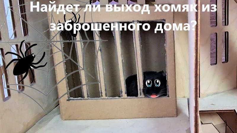 Найдет ли хомяк выход из лабиринта Заброшенный кукольный дом с пауками Хомки Даринелка
