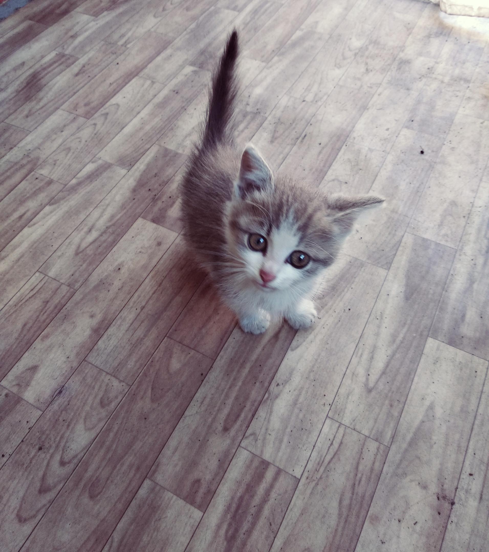 Котенок, мальчик, очень ласковый возраст, около месяца, спасли от собак  Пожалуйста  в хорошие руки ,подарите малышу дом .