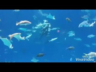 Кормление скатов. Приморский океанариум. Владивосток.