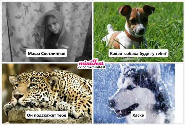 Маша Ростова Анекдот Видео