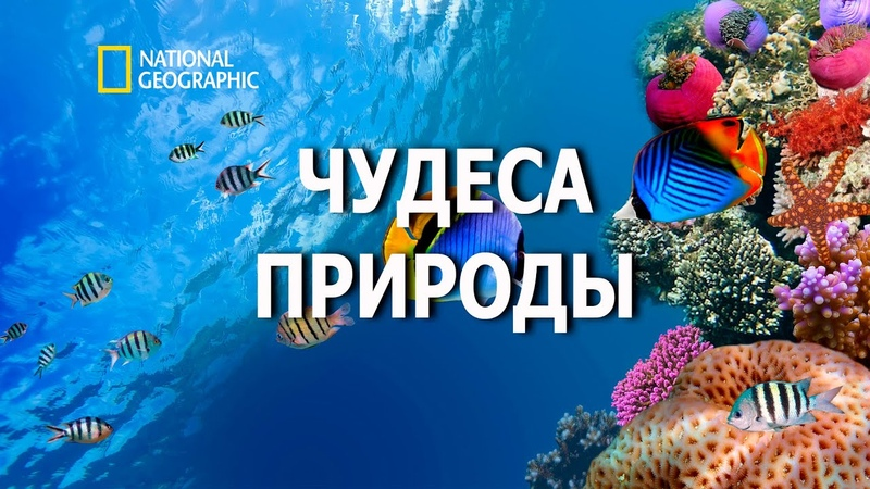Океаны и материки Документальный Фильм National Geographic 2020 Чудеса природы