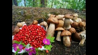 Мишустин и Налоги ( грибы, ягоды, Н/Маневр, и пр.). Самый богатый в Правительстве / Н. Платошкин