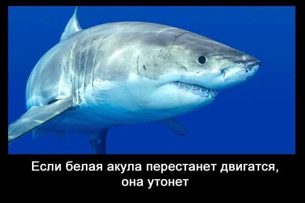 валтея - Интересные факты о акулах / Хищники морей.(Видео. Фото) YjzHKRCUgQ4