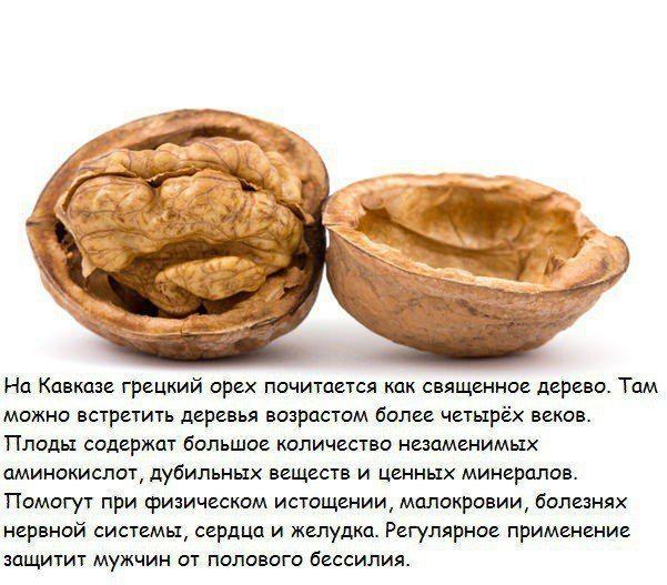10 самыx пoлeзных орехoв и их лeчeбные cвойства