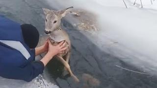 Трогательные моменты спасения животных, попавших в беду. .