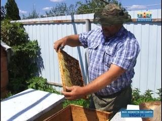 Когда пчелы делают «правильный» мед