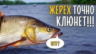 НА ЧТО ЛОВИТЬ ЖЕРЕХА ЛЕТОМ? Вся рыба клюет в корягах.