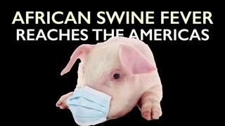 African Swine Fever reaches Americas - Threatens #1 Pork Exporter, USA