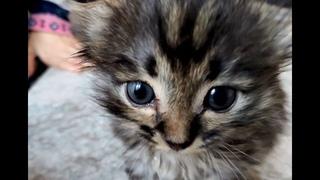 Самый милый на свете котёнок