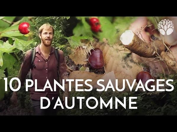 10 plantes sauvages à cueillir en automne