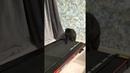 РЖАЧ Кот на беговой дорожке 2 МИНУТЫ СМЕХА ДО СЛЁЗ 2021 ЛУЧШИЕ РУССКИЕ ПРИКОЛЫ ржака угар ПРИКОЛЮХА