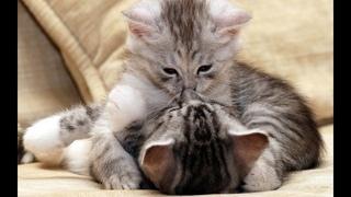 🐈 Котята - пушистые проказники! 🐈 Подборка приколов с котами для хорошего настроения! 😸
