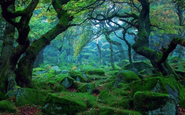 Шервудский Лес, Ноттингем, Англия