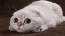 Сколько и как спят кошки - Интересные факты про кошек - Забавные, смешные, любопытные коты - Видео