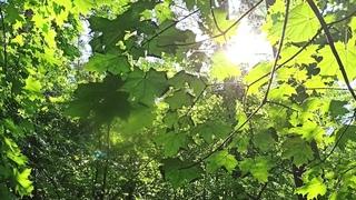 Morning power plogging in forest Vnukovskoye