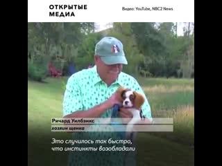 Американец спас щенка из пасти аллигатора и даже не уронил сигару