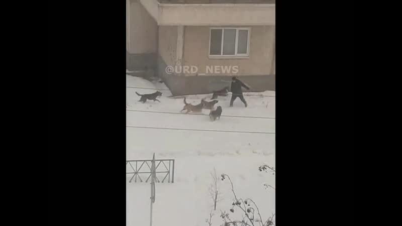 Бродячие агрессивные стаи собак в городе