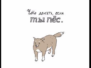 Что делать, если ты пёс