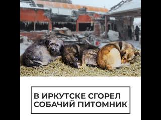 В Иркутске сгорел собачий питомник