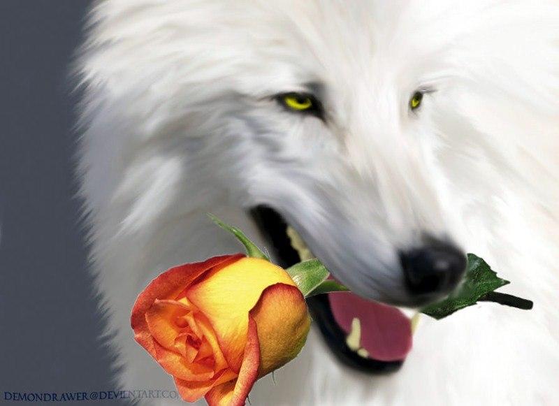 пластина фильтр фото волка с розой бассейну