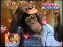 Japan Funny Show-Intelligent Monkey Kwaii!