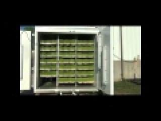Живой фураж - Гидропонный Зеленый корм