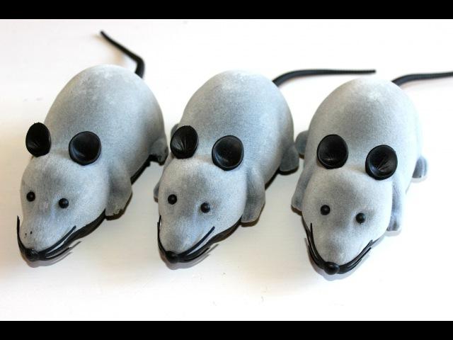 Серые крысы Grey rats Remote control Rats