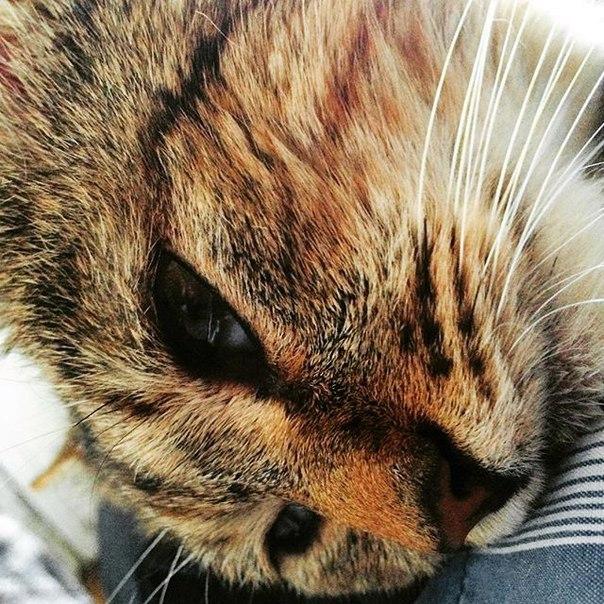 Taras Levin: Скучал по этому засранцу пушистому 😄 #village #cat
