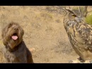 Dog and Deadly Owl are BFFs Animal Friendship Love Nature