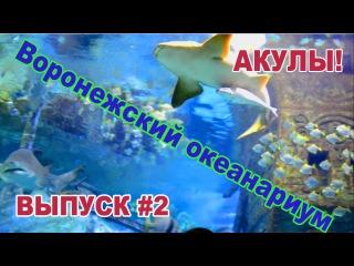 Воронежский океанариум. Часть 2.