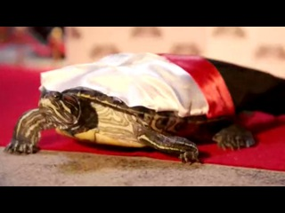 TEENAGE MUTANT NINJA TURTLES 2 TV Spot #55 - Real Turtles (2016) TMNT Movie HD