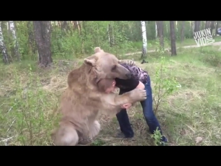 Man wrestling a bear _ bear hugs