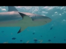 In honor of SharkWeek, I have another cool video and some shark-y facts to share: (Fact 1) - the demand for fins is one of the