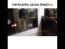 Кот блять