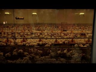 Сыр, мамина нежность и больше яиц - чего еще ждать от нижневартовских производителей