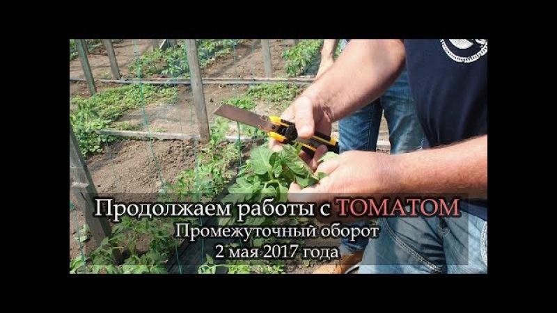 ШОК А вы знали такое про фосфор Ликбез Геннадьевича томат