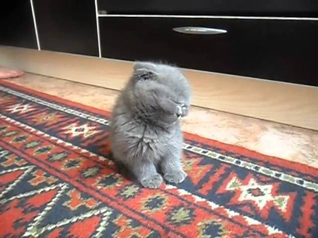 Cute Tired Kitten