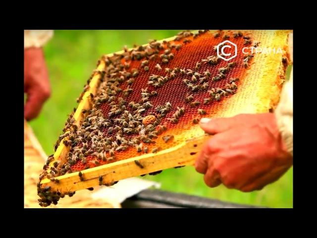 Башкирский мёд | Россия | Телеканал Страна