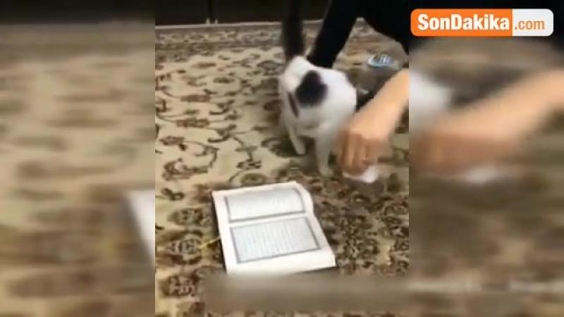 Kur'an-ı Kerim'e Basmayan Kedi İzleyenleri Şaşkına Çevirdi