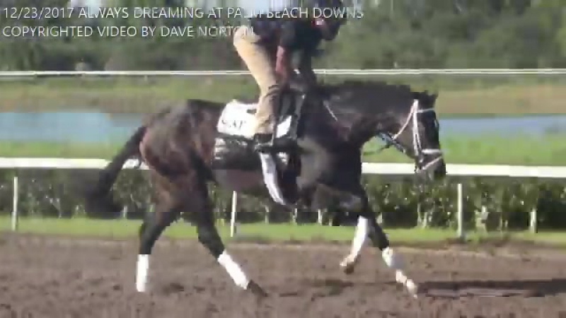 2017 @KentuckyDerby winner Always Dreaming on the track at Palm Beach Downs this morning.