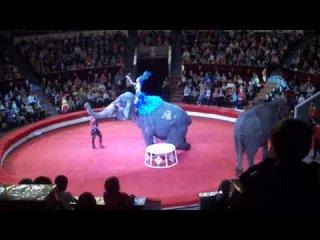 Мисс София рассказывает про Шоу индийских слонов! Варшавский цирк в г.Перми. ...