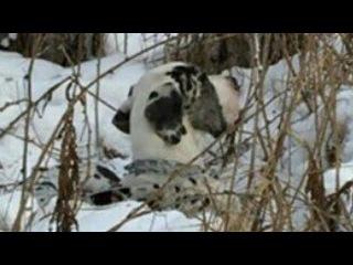 Хозяйка решила избавиться от пса, привязав его к дереву в мороз