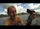 квази-овощ морской огурец