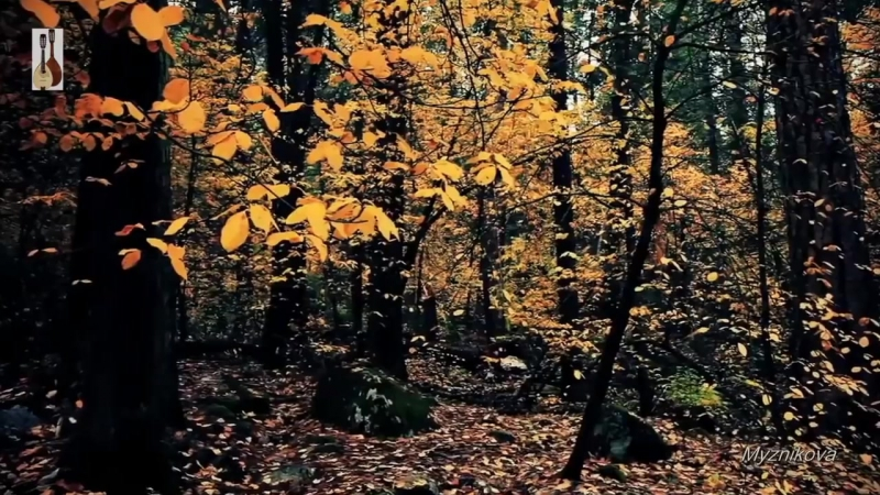 Осенняя зарисовка М Таривердиев Аutumn Природа Relax