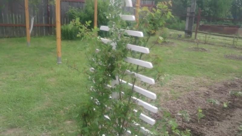Опора шпалера для плетистых цветов и кустарников