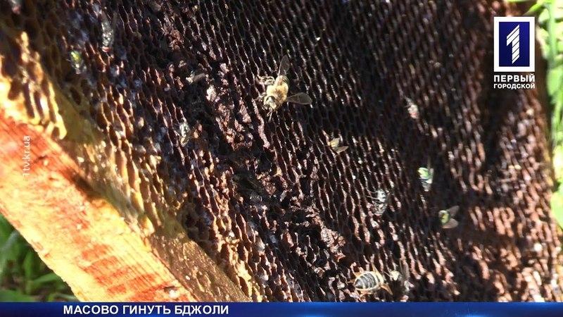 Під Кривим Рогом масово гинуть бджоли