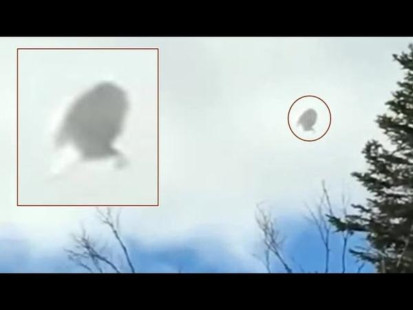Bulbous UFO filmed in Quebec, Canada