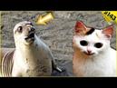 Коты приколы 2019 До слёз смешные видео про животных Funny Cats