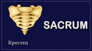 КРЕСТЕЦ | OS SACRUM | АНАТОМИЯ ДЛЯ СТУДЕНТОВ - МЕДИКОВ | АНАТОМИЯ ДЛЯ ПЕРВОКУРСНИКОВ